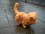 Самый жалкий в мире кот